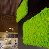 Flexi-panel z Islandského mechu sada 2 ks 100x60 - May green