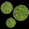 Mechový obraz (kruh) z kopečkového mechu sada 3ks
