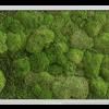 Mechový obraz přechodu kopečkového mechu v lesní mech 140x40
