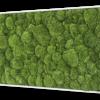 Mechový obraz z kopečkového mechu 100x60