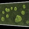 Mechový obraz z kopečkového mechu s lesním mechem 100x60