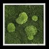 Mechový obraz z kopečkového mechu s lesním mechem 35x35