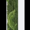 Mechový obraz z kopečkového mechu s lesním mechem 57x27