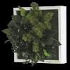 Rostlinný obraz Ostrovy 22x22