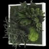 Rostlinný obraz Ostrovy 35x35