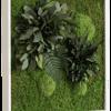 Rostlinný obraz Ostrovy 55x55