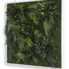 Rostlinný obraz Ostrovy 80x80
