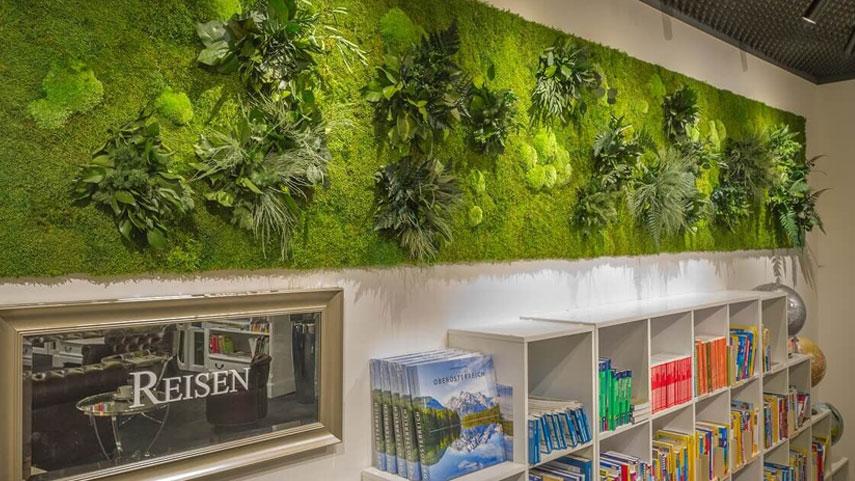Zelená stěna v knihovně jako kombinace mechů a rostlin pro zlepšení akustických vlastností